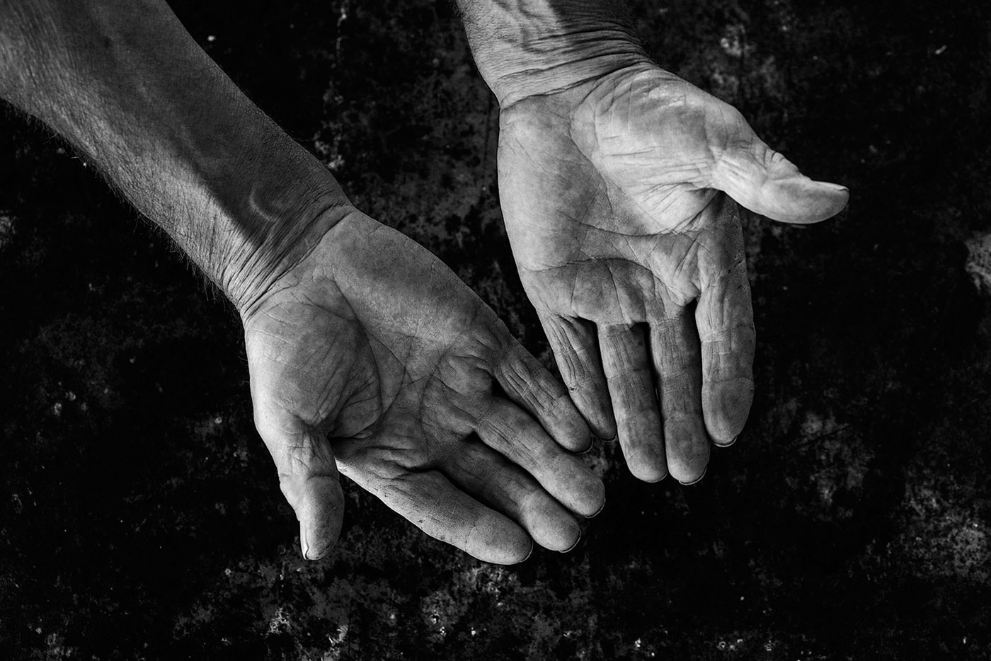 La vida en la palma de la mano
