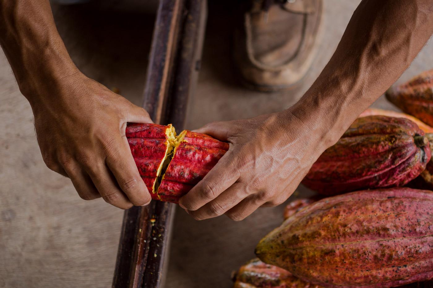 Pantone Cacao