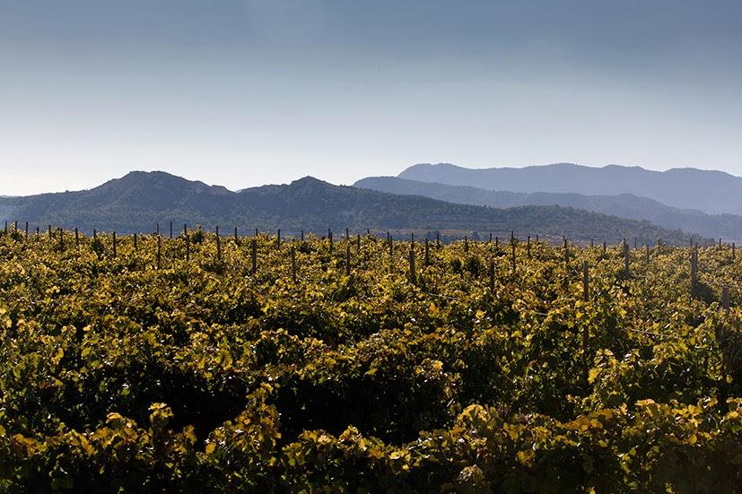 Rosendo. Productor de Uvas y Tomates.