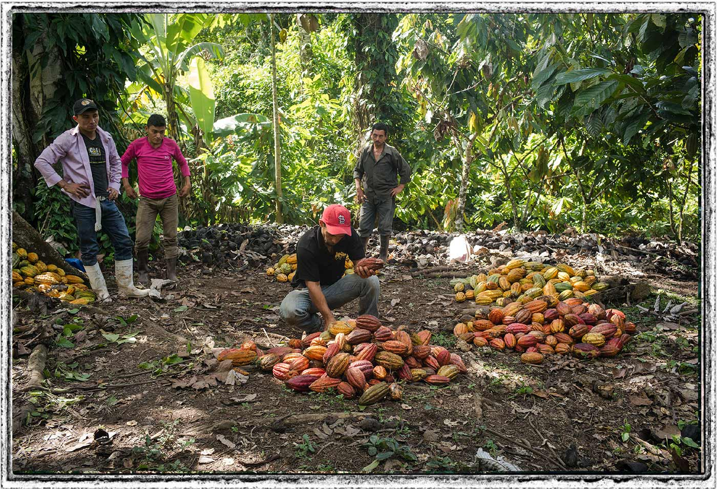 Juanito Flores. Working on the plantation