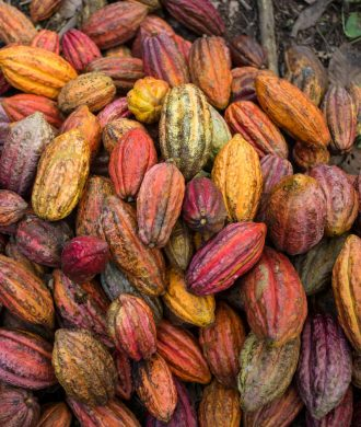 The Cocoa of Excellence Programme. Bioversity International.