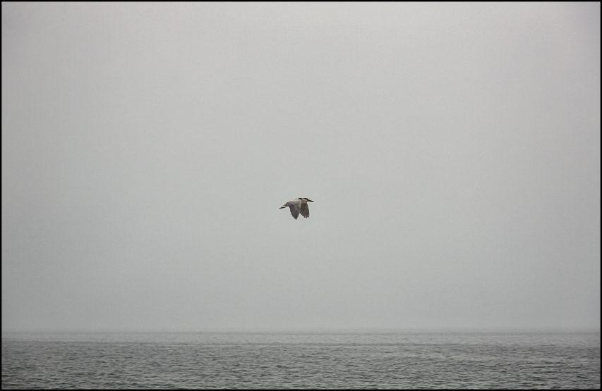 Historias Cortas – «El pájaro y el pescador»