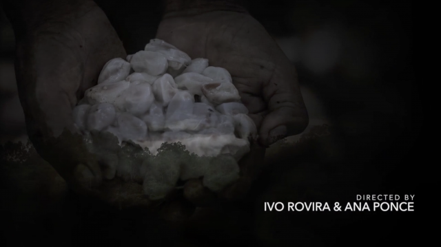 CacaoCollective/Documental